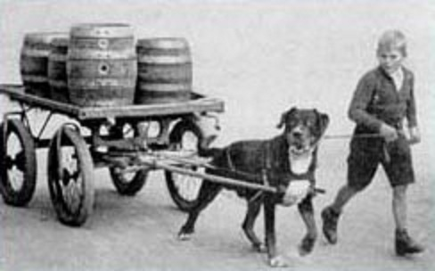 History Train Your Rottweiler