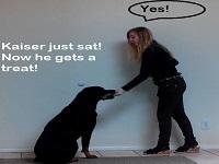 Rottweiler's Sit